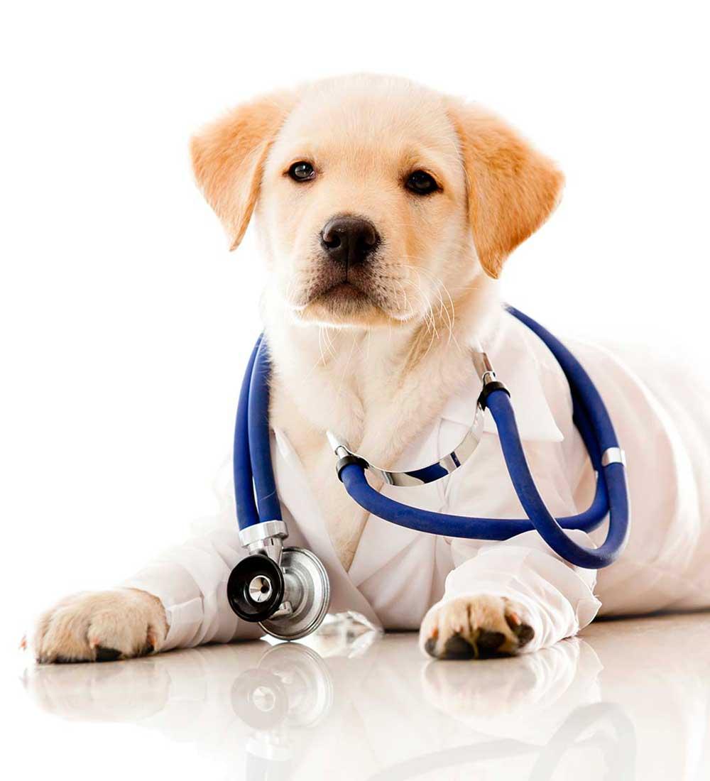 rilascio certificazione veterinaria