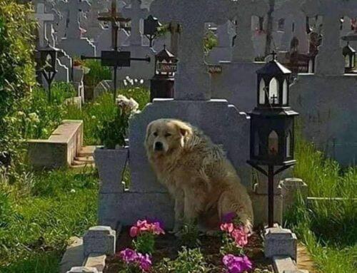 È più di un cane, è la mia famiglia.
