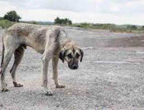 Animali maltrattati: le pene sono troppo basse? Perché oggi si riesce quasi sempre ad evitare il carcere