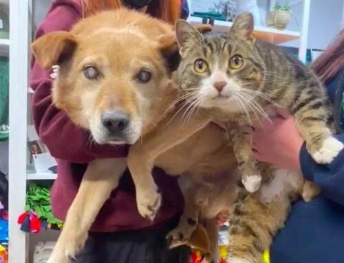 """na delle credenze più comuni è quella che riguarda gatti e cani, la cui maggioranza della gente pensa che non possano convivere insieme. Quella diSpike e Maxinvece, è una storia che lascerà tutti a bocca aperta.  Spike è un cagnolino con disturbi dicecità, mentre Max, un affettuoso gattino, è il suo ormaiinseparabileamico. Il gatto è diventato un pilastro fondamentale per la vita del cane. """"Il gatto lo ha aiutato nella sua avventura per la sopravvivenza. Si seguono ovunque, fanno tutto insieme e dormono rannicchiati"""", dicono riguardo Spike e Max  Nessuno dei due riesce più a vivere senza l'altro, hanno la stessa età e sono praticamente cresciuti insieme. Sono stati lasciati entrambi fuori dalla Saving Grace Animal Society ad Alix, un associazione per la salvaguardia degli animali, in Canada. I vecchi padroni li hanno dovuti dar via in quanto non erano più in grado di dargli tutte le attenzioni di cui avevano bisogno, dato che i due amici dormivano fuori e le temperature non erano delle migliori.  """"Abbiamo ricevuto una chiamata riguardante un cane anziano e un gatto in una proprietà. Ci hanno detto che, viste le basse temperature, onestamente non sapevano se avrebbero avuto la giusta qualità di vita e se sarebbero stati in grado di provvedere a loro nei migliore dei modi"""", ha dichiarato Erin Deems, direttore esecutivo di Saving Grace Animal Society, ai media locali  Max è diventato la guida di Spike. Il gatto lo aiuta a muoversi, accompagnandolo ovunque. Non lo lascia mai solo, sviluppando anche dei segni di comunicazione per farsi capire dal suo amico: la durata delle fusa, dei colpi con la zampetta o anche un miagolio un po' più prolungato. Lo porta fuori a fare le passeggiate, giocano insieme e Spike non riesce a fare a meno di cercarlo in continuazione. Per questo motivo i due avevano la necessità di essere adottati insieme, e così è stato.  Una giovane donna ha deciso prenderli entrambi e portarli con se nella loro nuova casa, con l'intenzione di regalargli una """