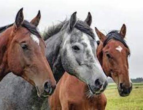 La Grecia dice addio alla macellazione dei cavalli: d'ora in poi saranno equiparati a cani e gatti