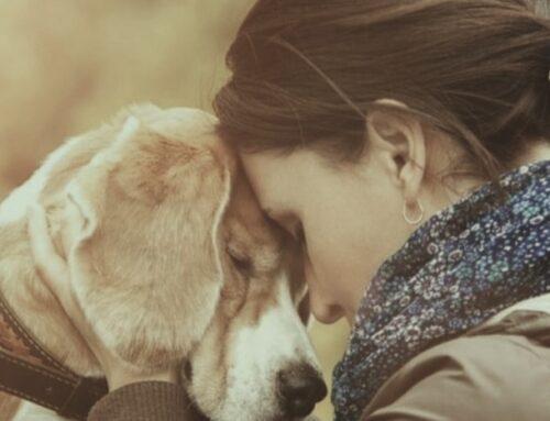 Perdere un cane fa soffrire quanto dire addio a un familiare: lo dice la scienza